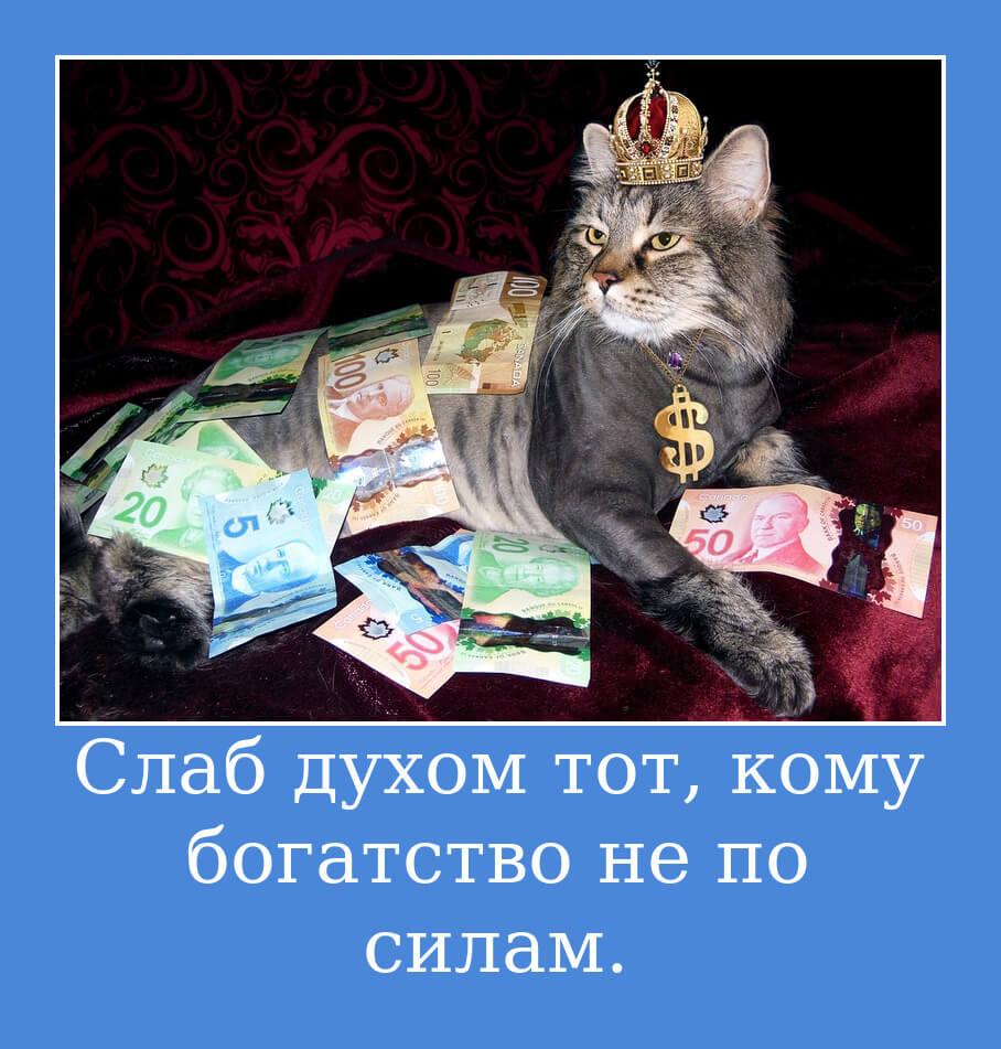 На фото кот в короне и засыпанный деньгами.