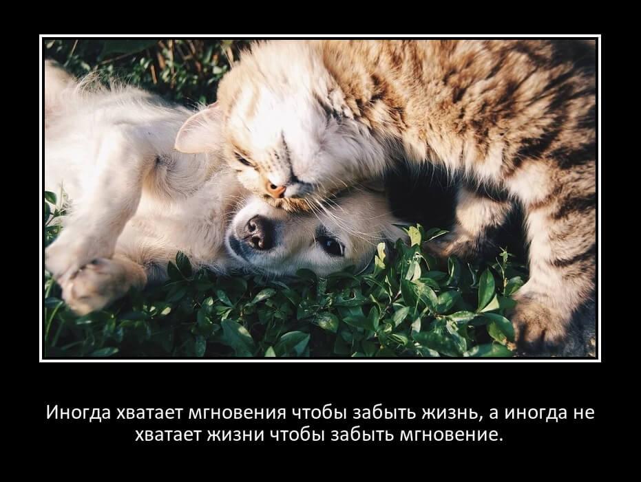 На фото изображены кот и собака и надпись: Иногда хватает мгновения чтобы забыть жизнь, а иногда не хватает жизни чтобы забыть мгновение.