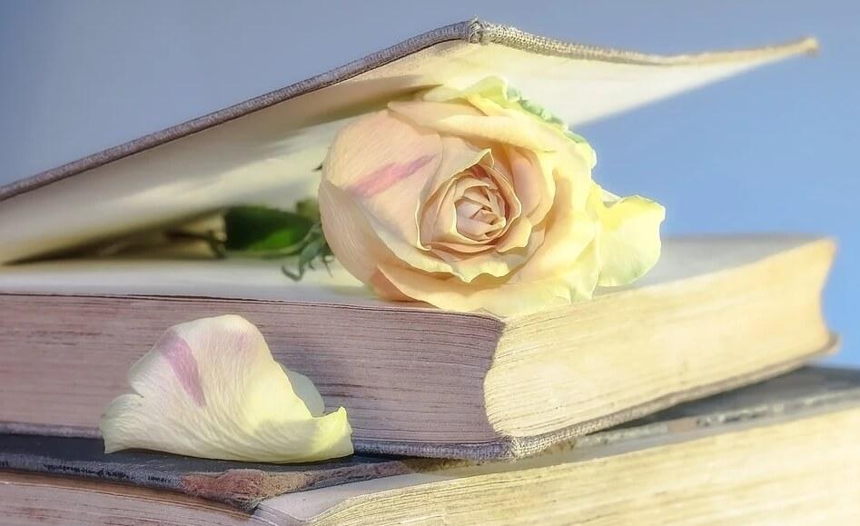 На фото изображена книга, в которой белая роза.