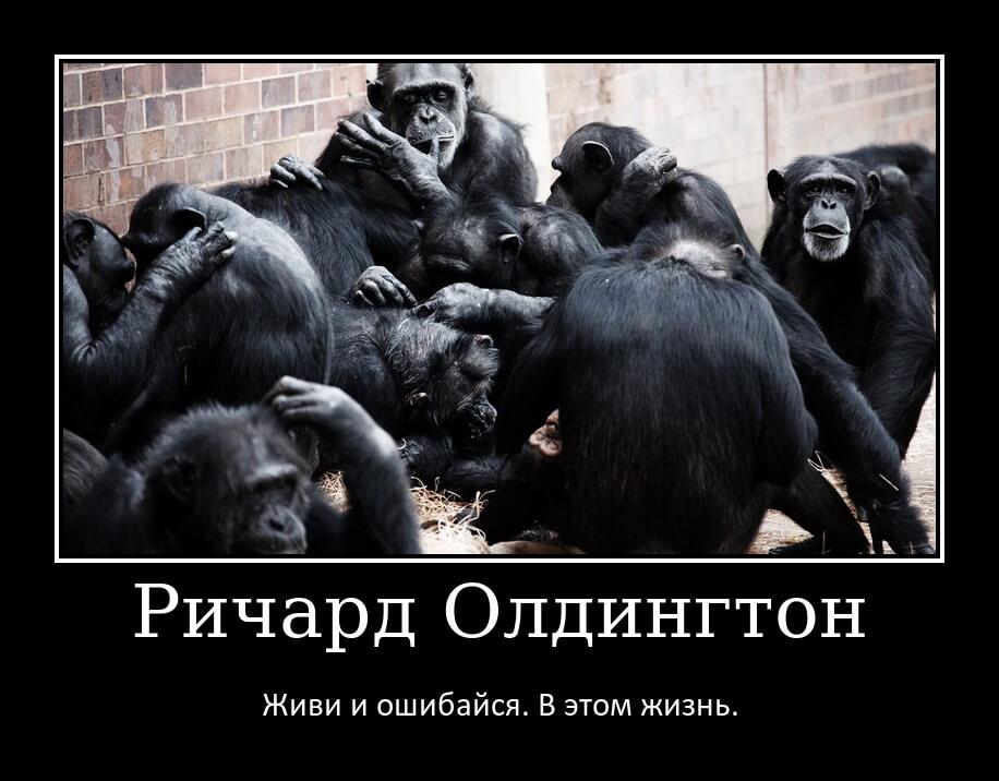 На фото много обезьян.