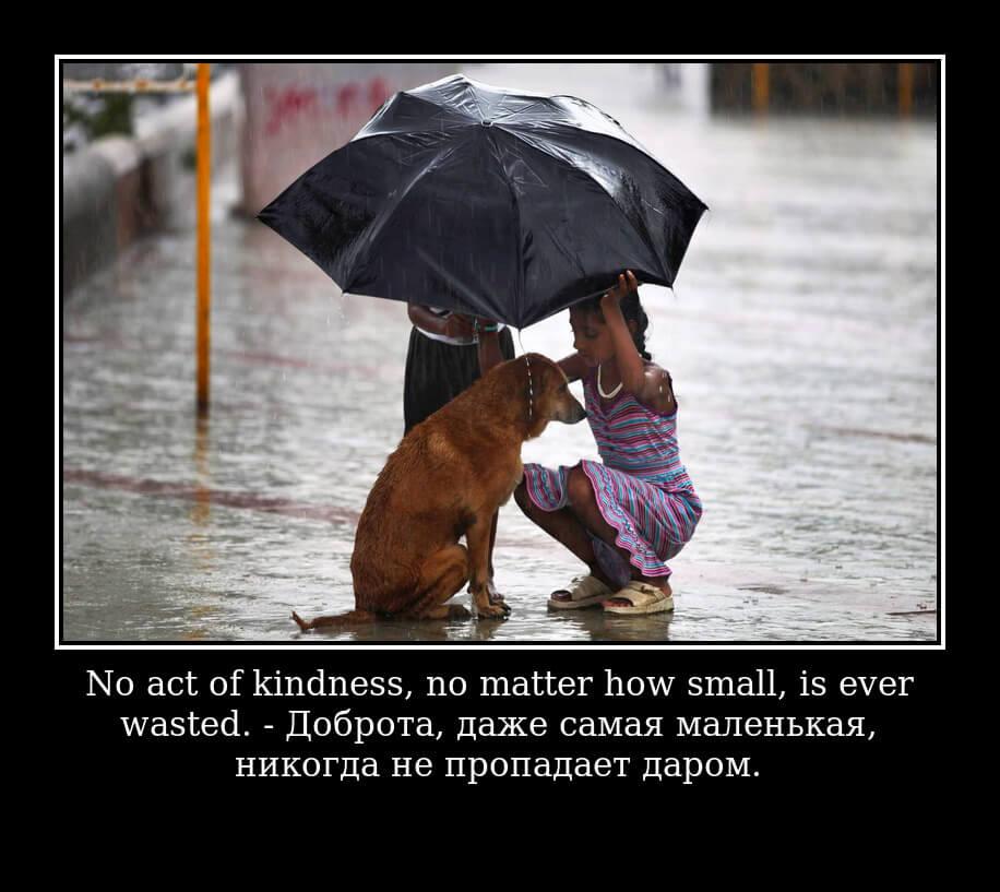 Доброта, даже самая маленькая, никогда не пропадает даром.