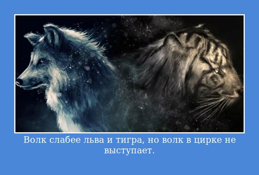 Волк слабее льва и тигра, но волк в цирке не выступает.