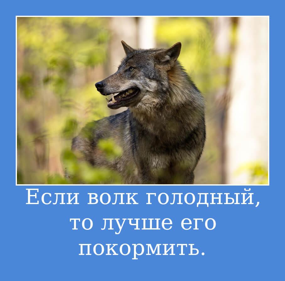 Если волк голодный, то лучше его покормить.
