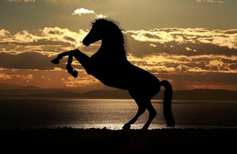 Лошадь на фоне заката.