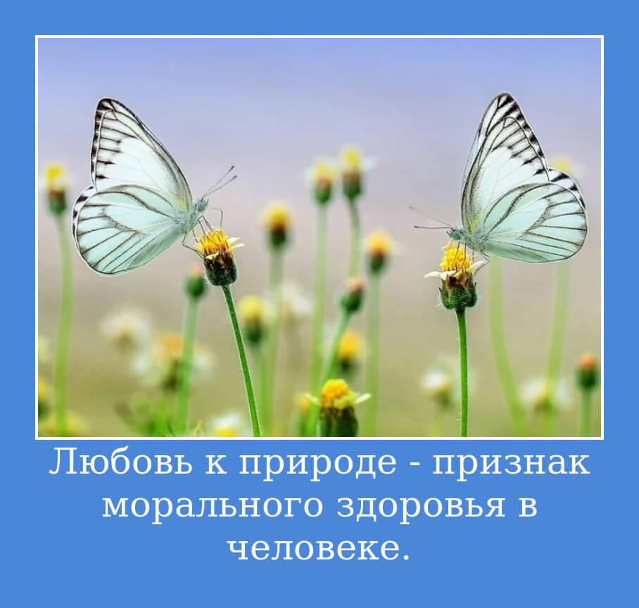 Любовь к природе - признак морального здоровья в человеке.