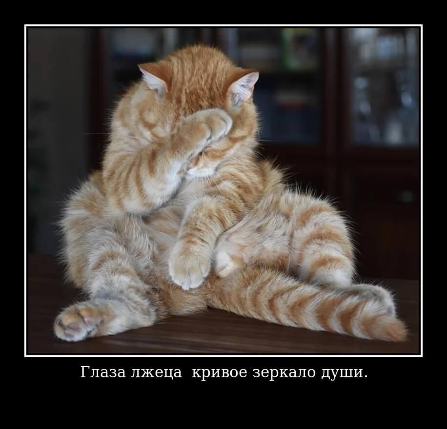 Цитата: Глаза лжеца – кривое зеркало души.