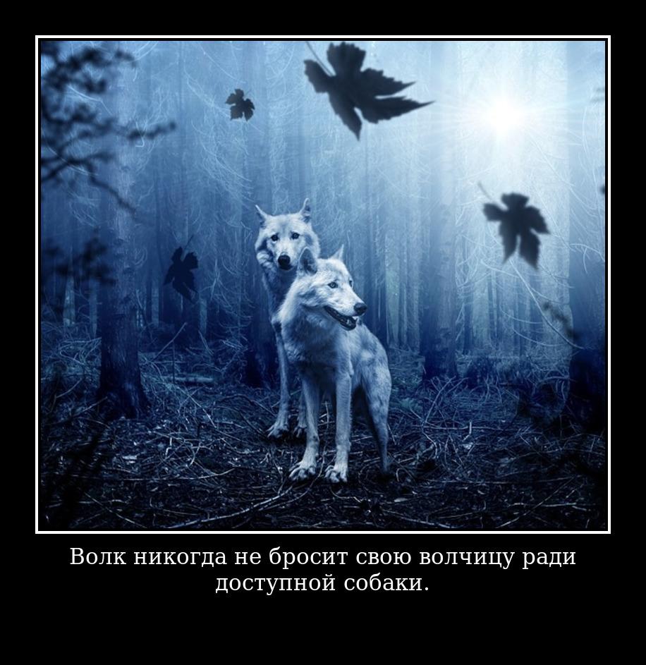 Волк никогда не бросил свою волчицу ради доступной собаки.