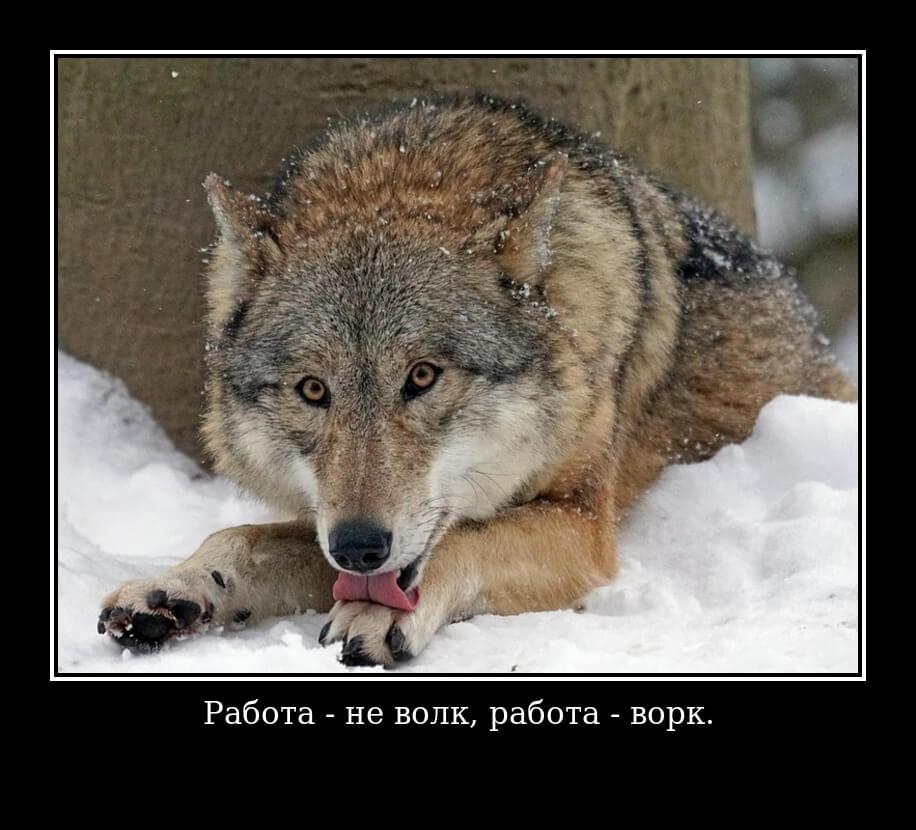 Работа - не волк, работа - ворк.