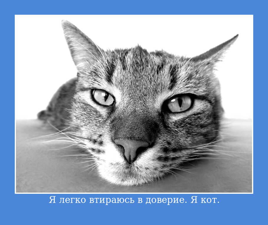 Я легко втираюсь в доверие. Я кот.