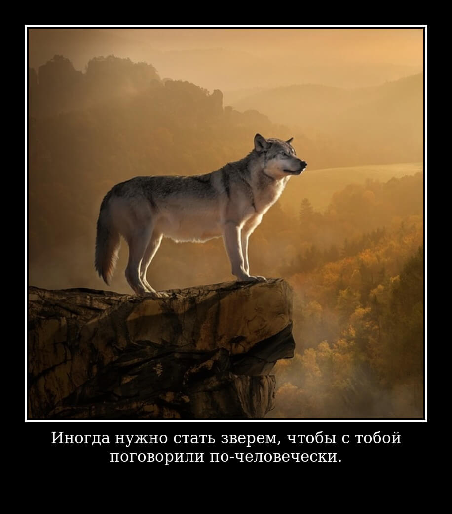 Иногда нужно стать зверем, чтобы с тобой поговорили по-человечески.