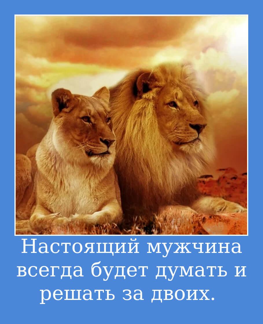 Настоящий мужчина всегда будет думать и решать за двоих.