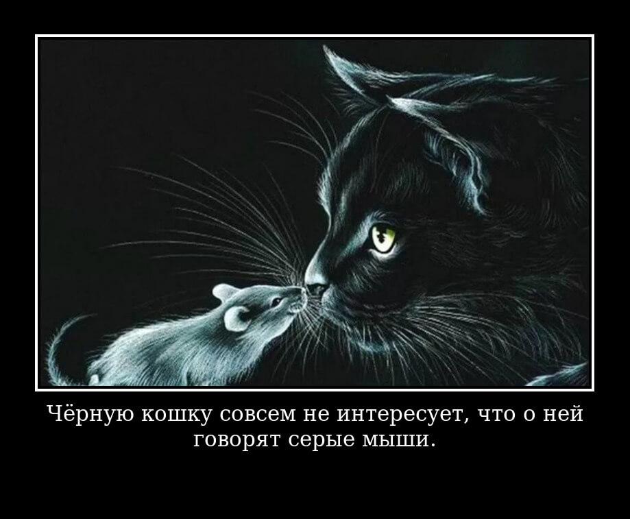 """На фото изображено высказывание Раневской """"Чёрную кошку совсем не интересует, что о ней говорят серые мыши""""."""