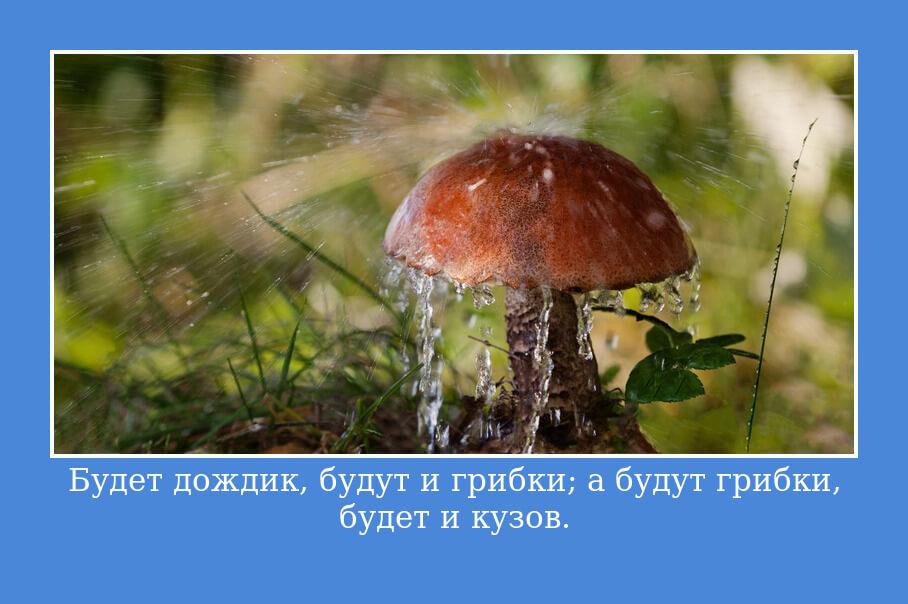 """На фото изображена цитата из книги Пушкина """"Капитанская дочка""""."""