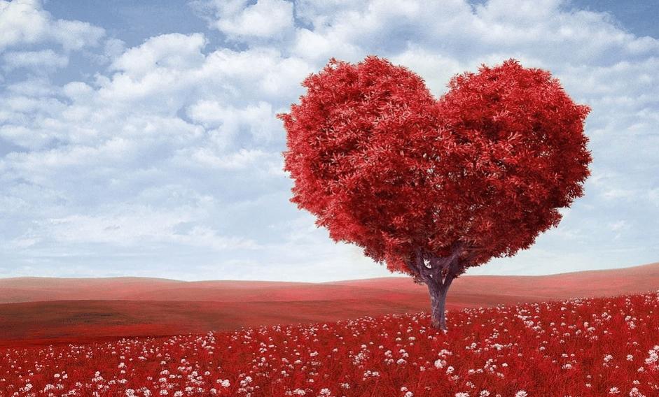 На фото изображено дерево в форме сердца.