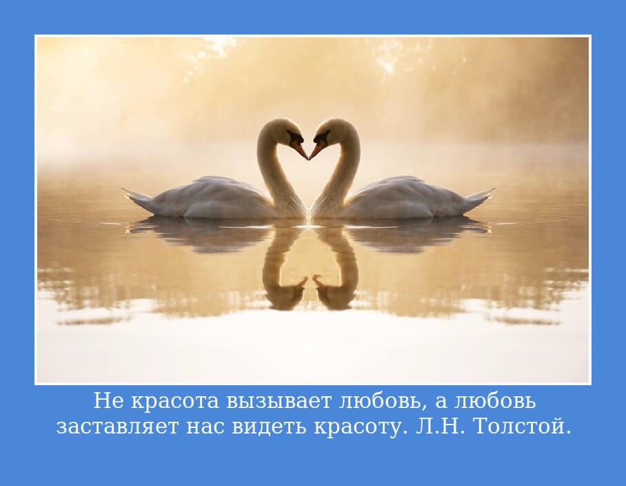 """На фото изображена цитата """"Не красота вызывает любовь, а любовь заставляет нас видеть красоту""""."""