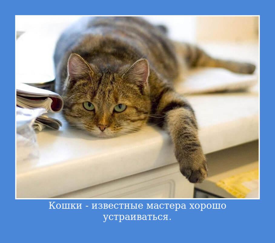 Кошки — известные мастера хорошо устраиваться.