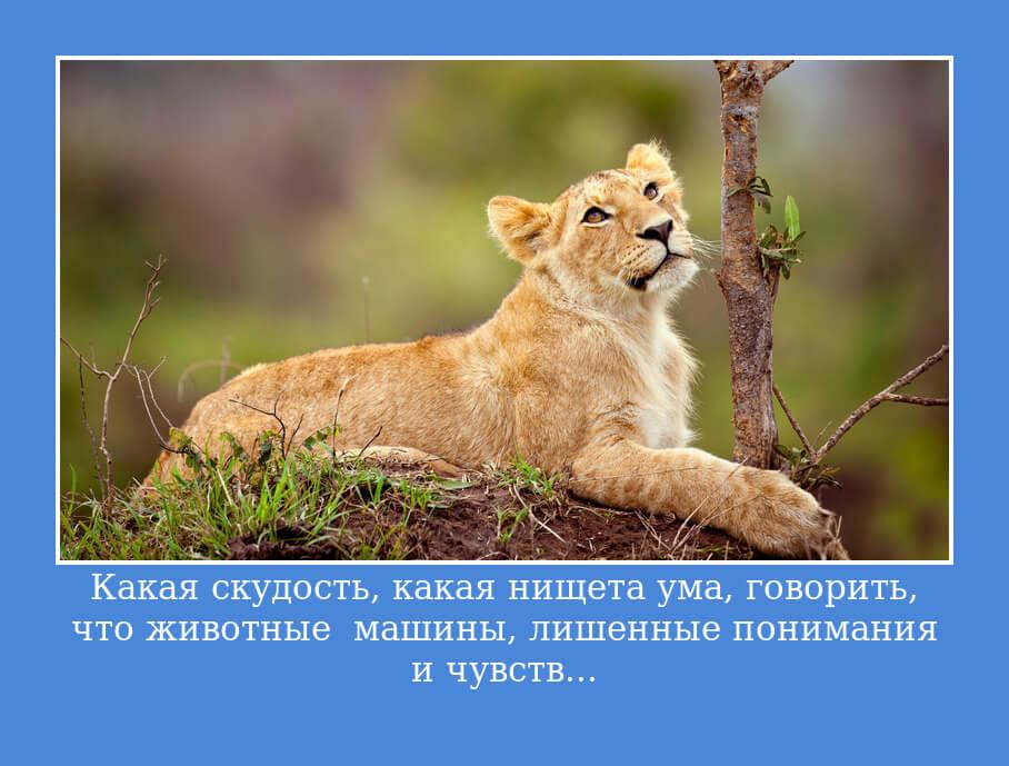 Какая скудость, какая нищета ума, говорить, что животные — машины, лишенные понимания и чувств...