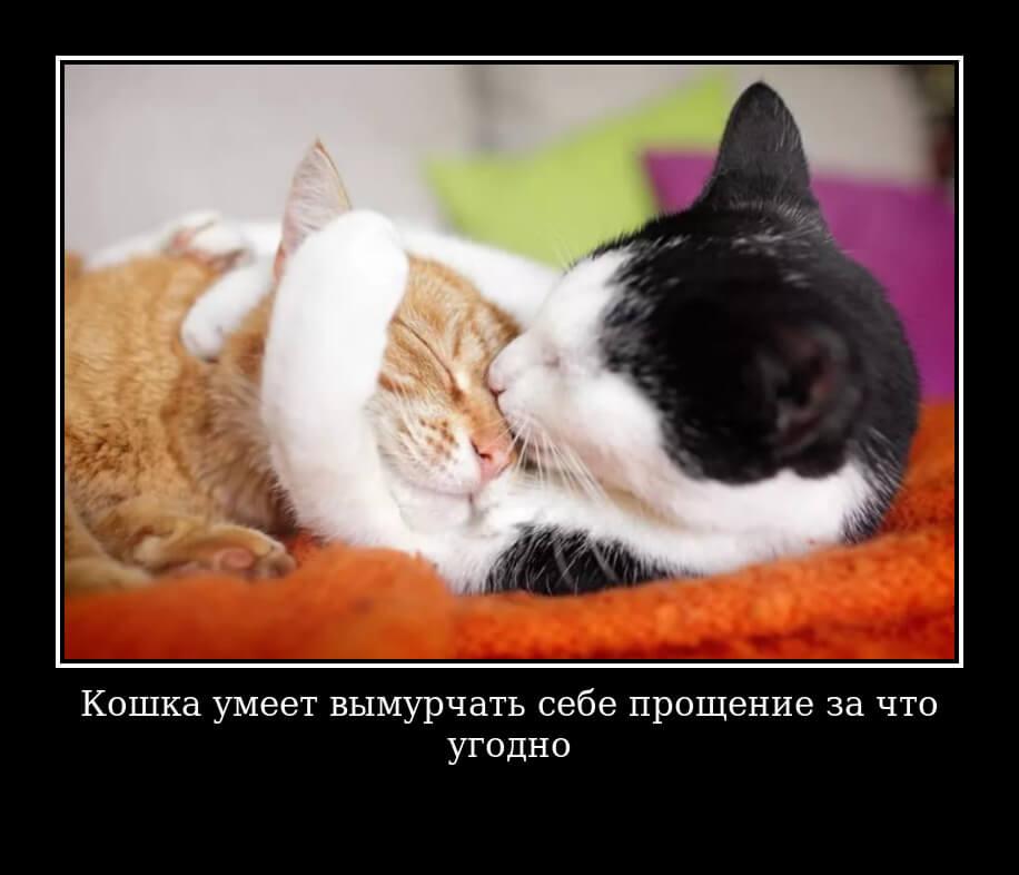 Кошка умеет вымурчать себе прощение за что угодно