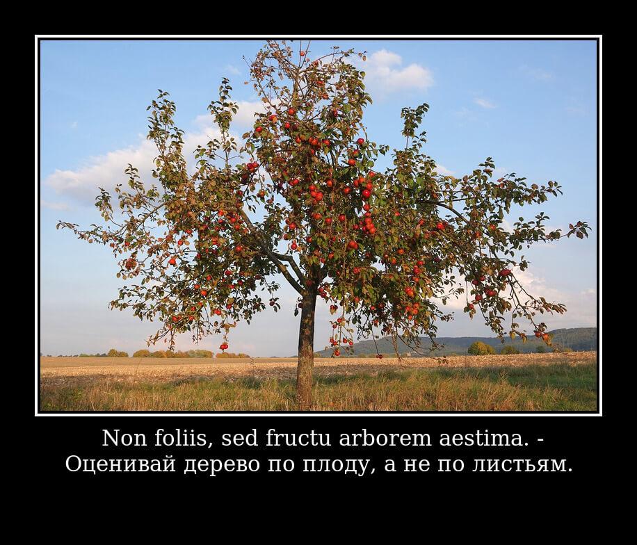 Non foliis, sed fructu arborem aestima — Оценивай дерево по плоду, а не по листьям.