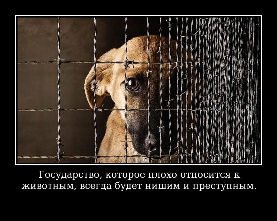 Государство, которое плохо относится к животным, всегда будет нищим и преступным.