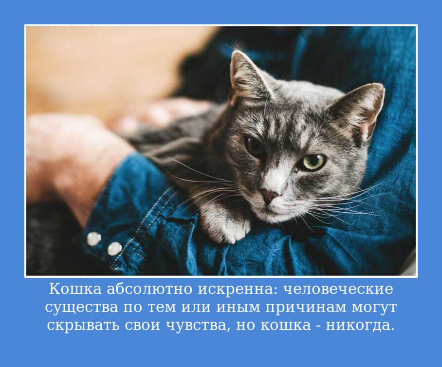 Кошка абсолютно искренна: человеческие существа по тем или иным причинам могут скрывать свои чувства, но кошка — никогда.
