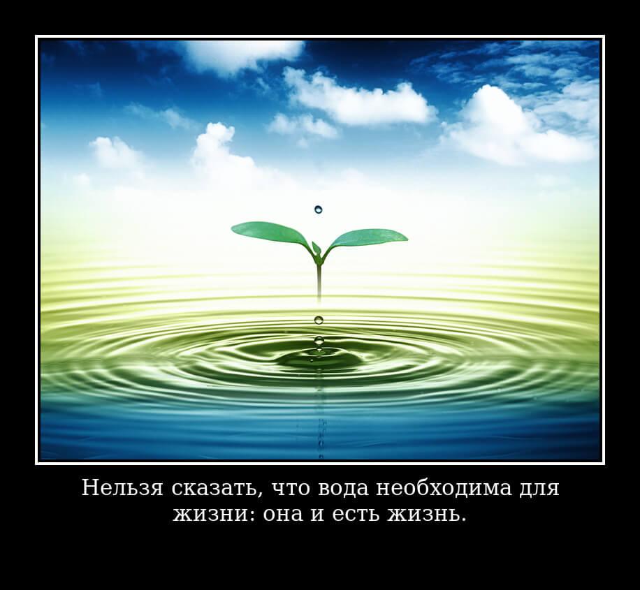 Нельзя сказать, что вода необходима для жизни: она и есть жизнь.