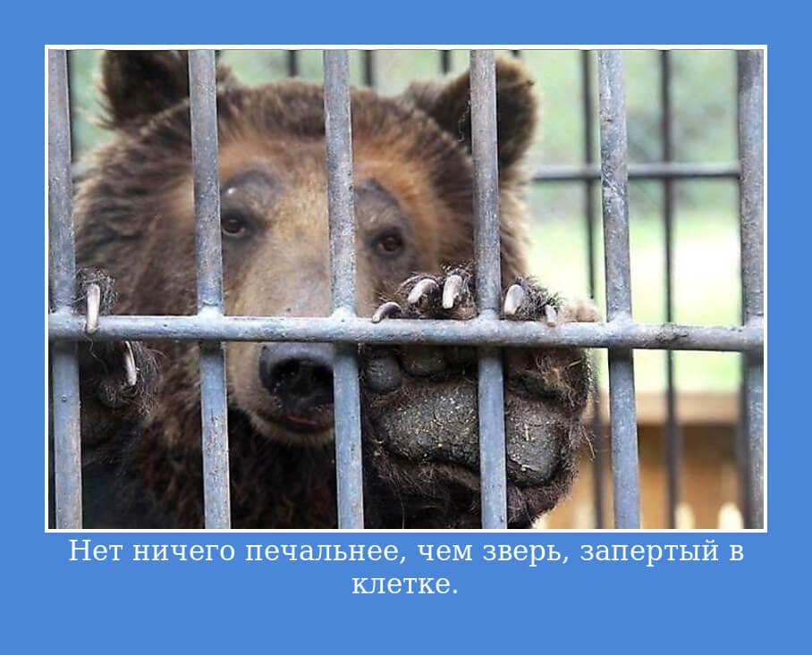 Нет ничего печальнее, чем зверь, запертый в клетке.