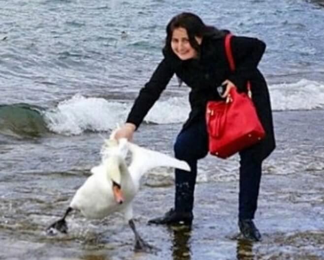 Девушка поймала белого лебедя за крыло.