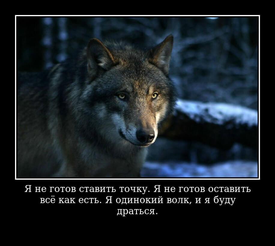 Я не готов ставить точку. Я не готов оставить всё как есть. Я одинокий волк, и я буду драться.