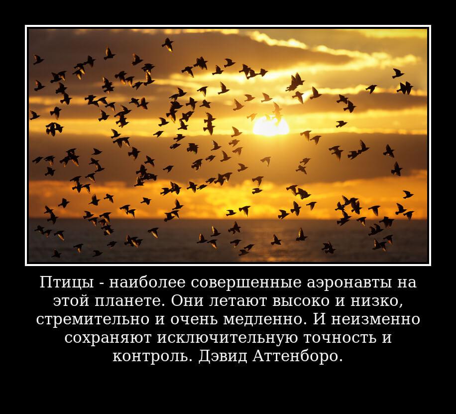 Птицы – наиболее совершенные аэронавты на этой планете. Они летают высоко и низко, стремительно и очень медленно. И неизменно сохраняют исключительную точность и контроль. Дэвид Аттенборо.
