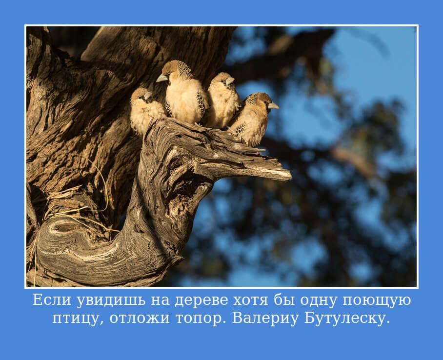 Если увидишь на дереве хотя бы одну поющую птицу, отложи топор. Валериу Бутулеску.