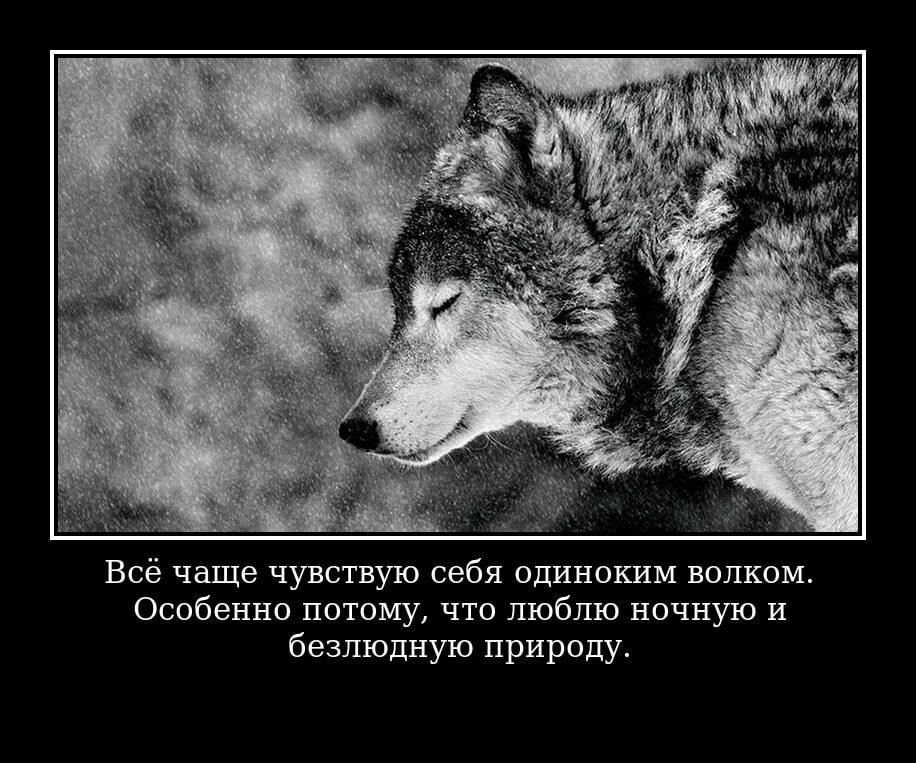 Всё чаще чувствую себя одиноким волком. Особенно потому, что люблю ночную и безлюдную природу.