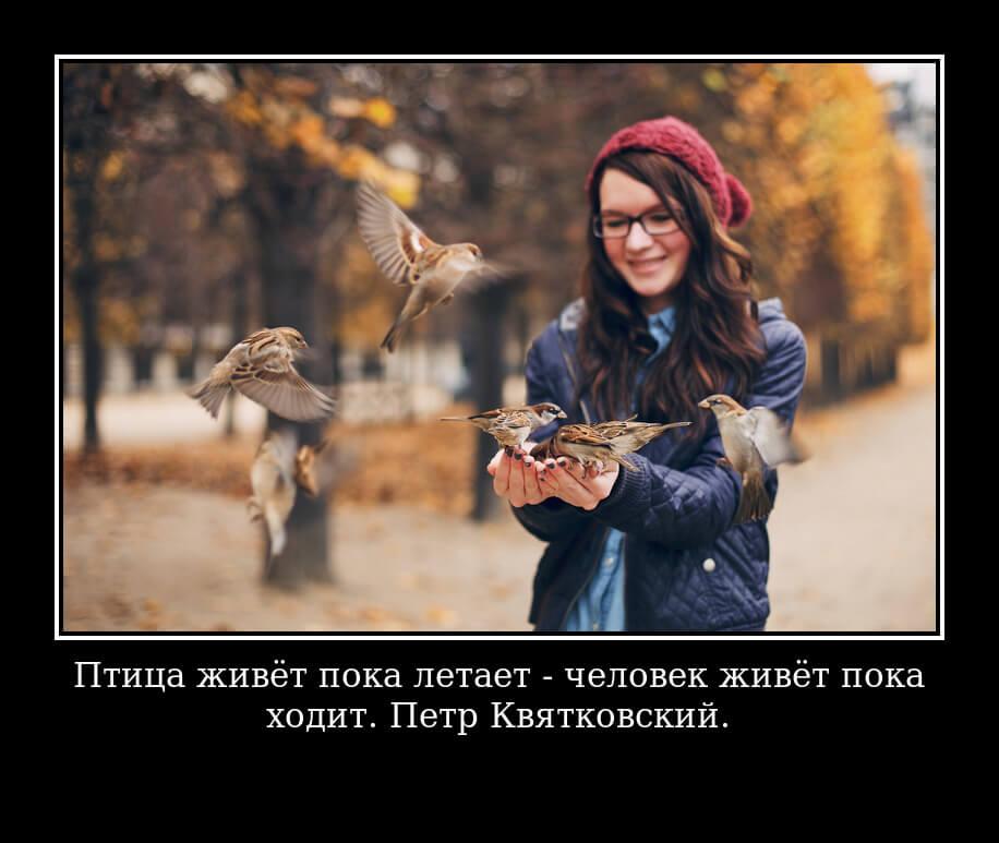 Птица живёт пока летает - человек живёт пока ходит. Петр Квятковский.