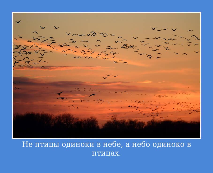 Не птицы одиноки в небе, а небо одиноко в птицах.
