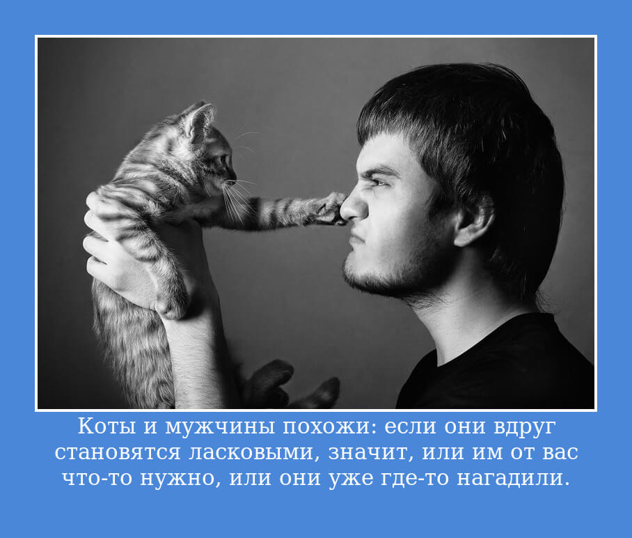 Коты и мужчины похожи: если они вдруг становятся ласковыми, значит, или им от вас что-то нужно, или они уже где-то нагадили.