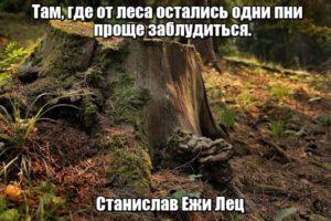 Там, где леса остались одни пни, проще заблудиться. Станислав Ежи Лец.