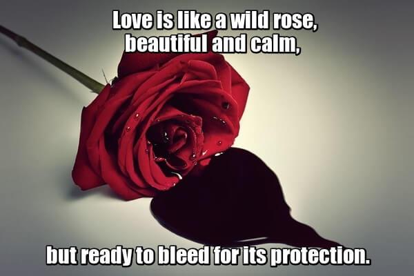 Love is like a wild rose, beautiful and calm, but ready to bleed for its protection. - Любовь очень похожа на дикую розу, красивую и спокойную, но готовую пустить кровь для своей защиты. Марк Овербай.