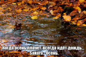 Когда осень плачет, всегда идёт дождь... Sakura - Осень.