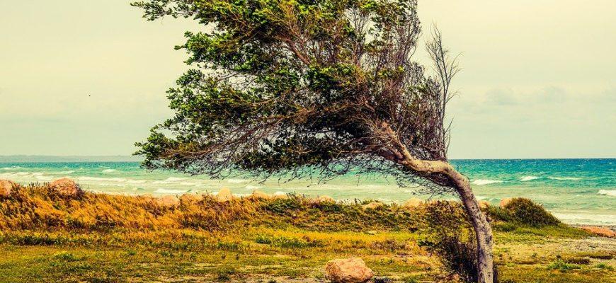 Дерево гнется от ветра. Где найти красивые цитаты про ветер.