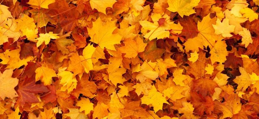 Опавшие листья. Где найти красивые цитаты про осень.