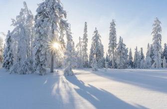 Зимний лес. Где найти красивые цитаты про снег.